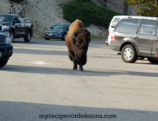 Parking Lot Buffalo